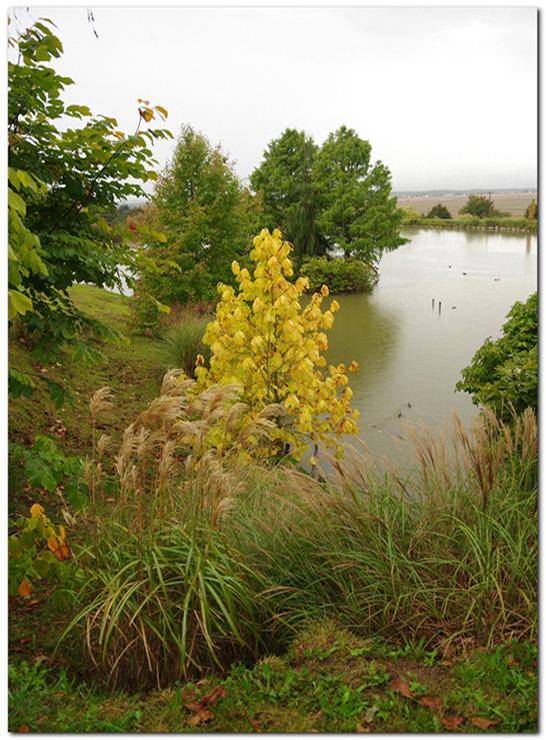 L automne au jardin du bois marquis 38 vernioz par christian raffin photoclub de vienne 38200 - Jardin bois marquis vernioz colombes ...